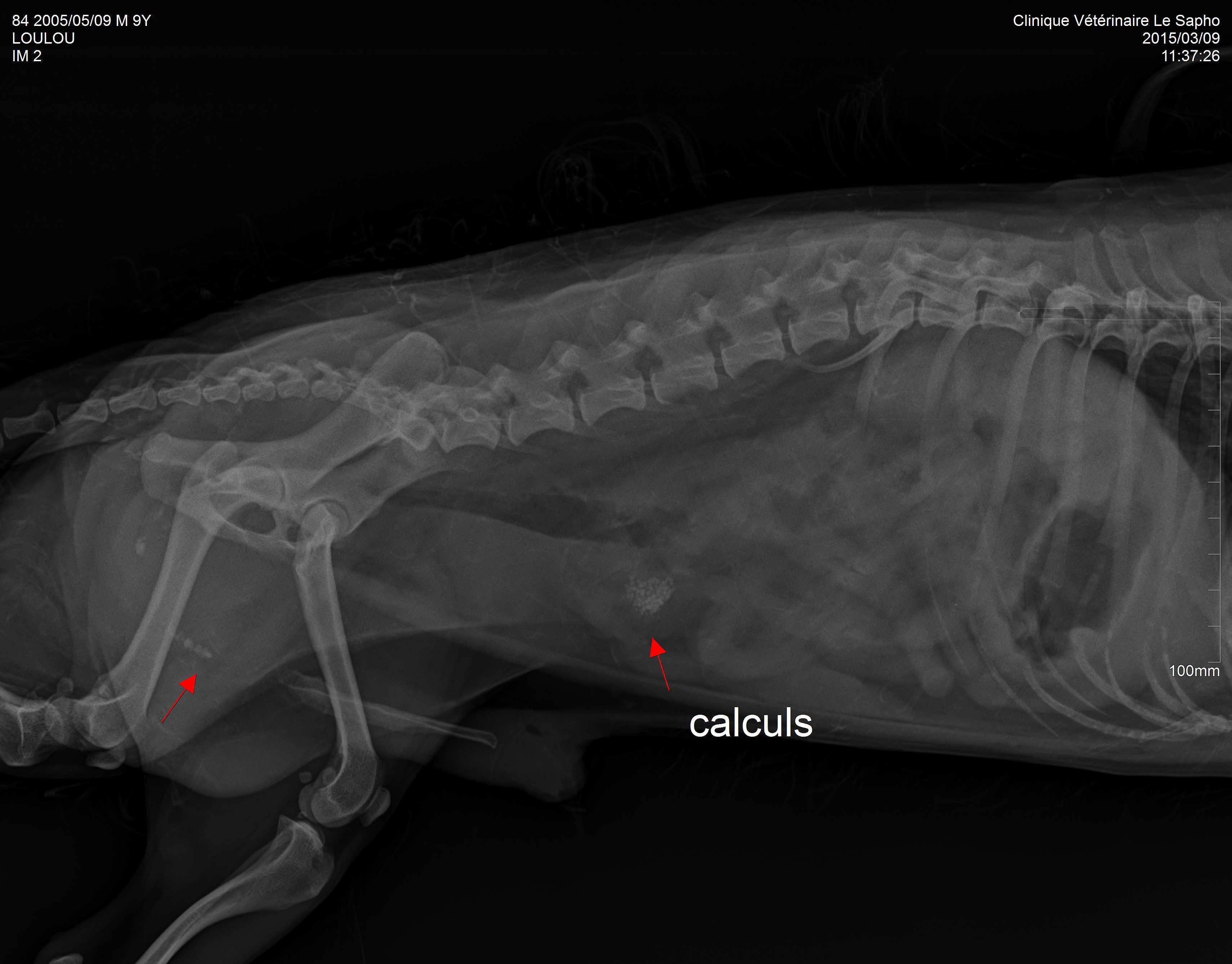 vétérinaire cagnes calculs