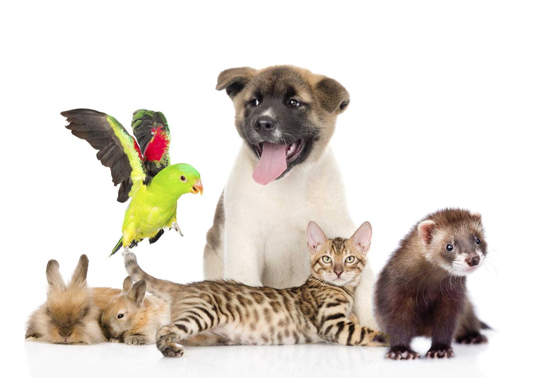 Прикольные картинки животных с подписями 70 фото